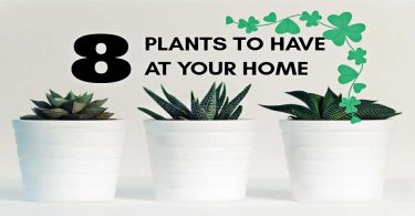 8 Healthiest Plants To Have In Your House